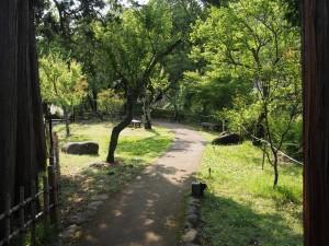 修善寺 赤蛙公園遊歩道 ほたる鑑賞