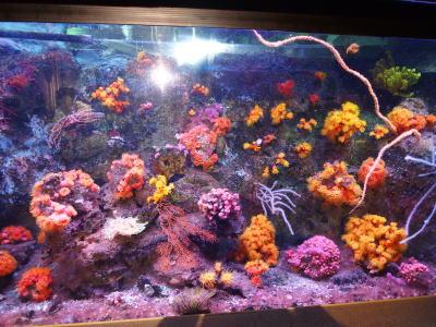 カラフルなサンゴ礁