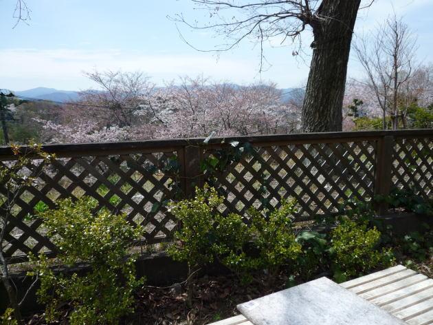 桜並木を見下ろせるバーベキュー場で、お花見しながらアウトドアBBQ!