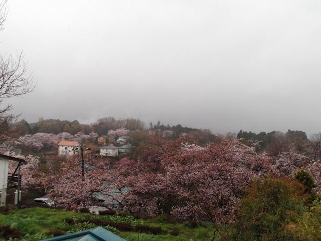 山一面が桜に覆われる別荘地。桜大通りを見下ろす一戸建てコテージからの景色