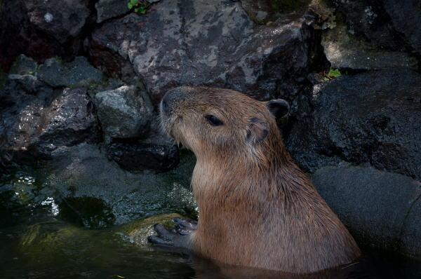 伊豆コテージで温泉を楽しむ