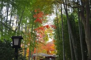 伊豆修善寺 竹林の小径