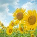 夏の画像 イメージ