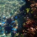 熱帯魚のような、見たことないカラフルなお魚がたくさん泳いでいるヒリゾ浜!
