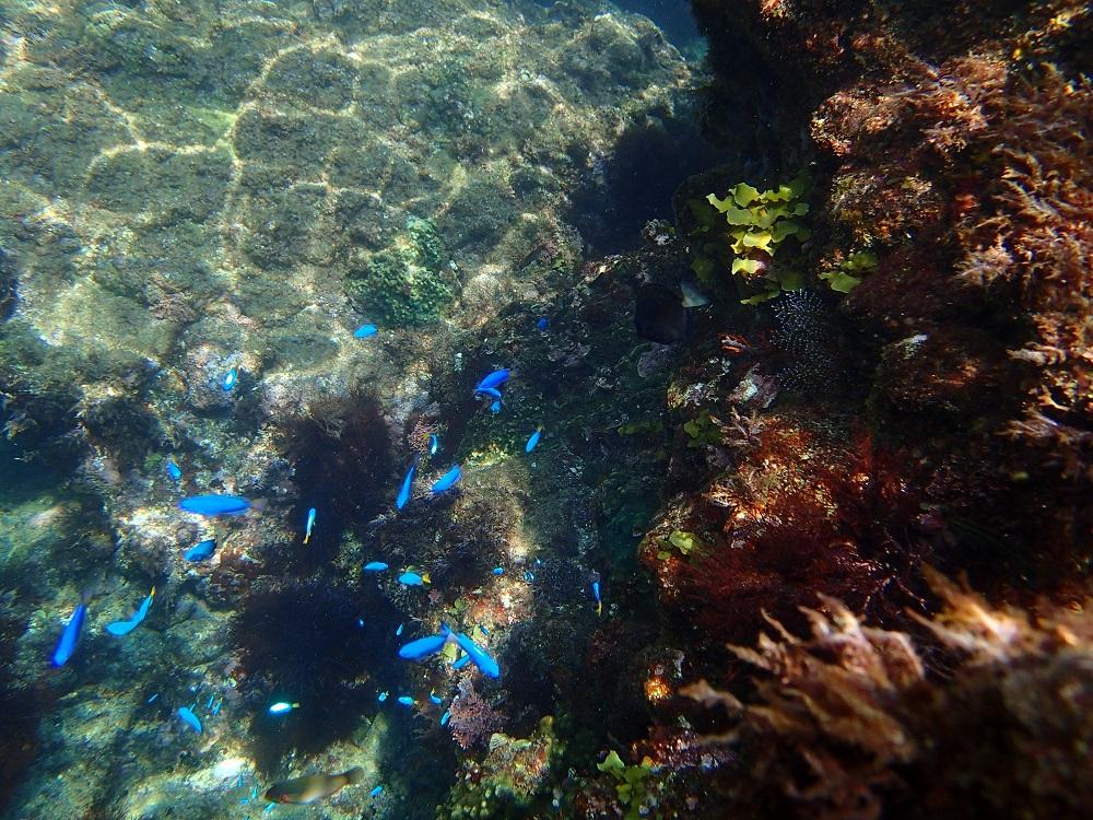 素人でもこんな海の中の世界を楽しめるシュノーケルスポット、ヒリゾ浜