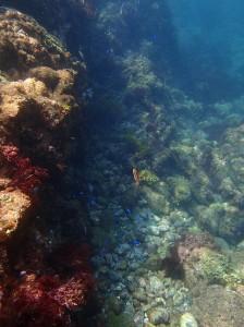 ヒリゾ浜の回遊魚とサンゴ
