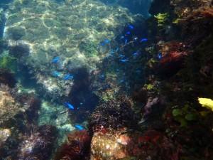 ヒリゾ浜の透明度は最高