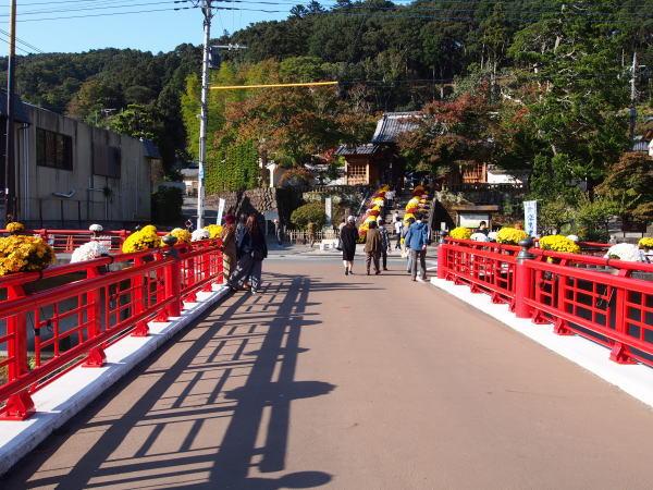 izu-autumn-kiku02