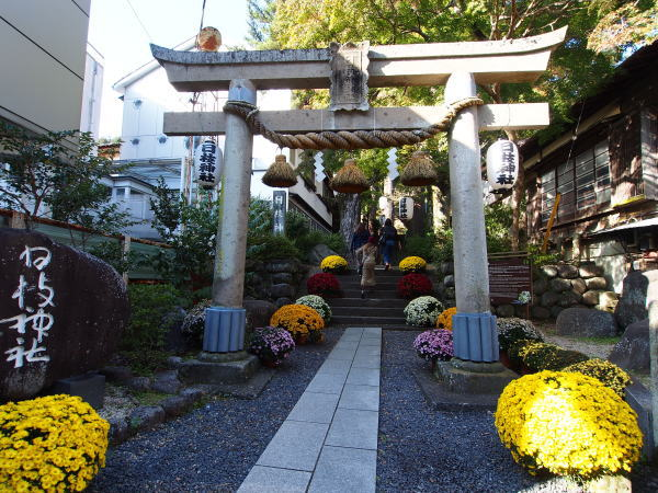 日枝神社の菊まつり