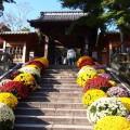 izu-chrysanthemumdecoration-01