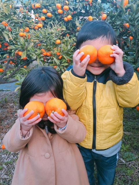 izu-tangerinefarm01