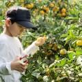 izu-tangerinefarm02