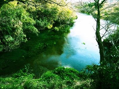 富士山の湧き水 柿田川公園