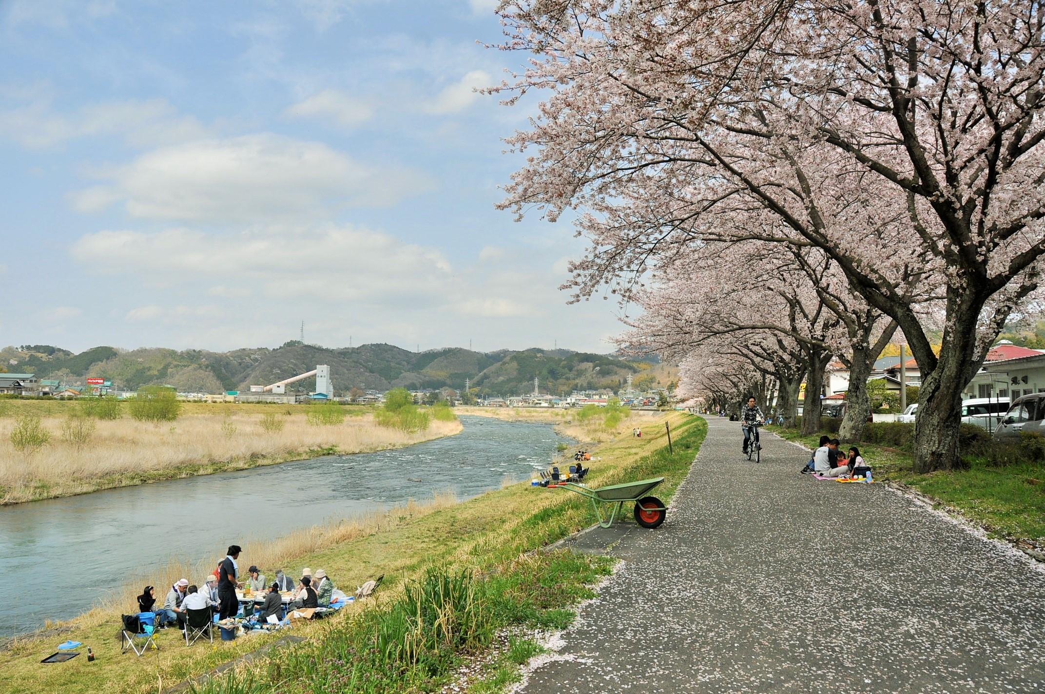 kanogawa-forest-sakura
