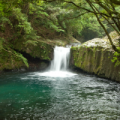 河津七滝 エビ滝