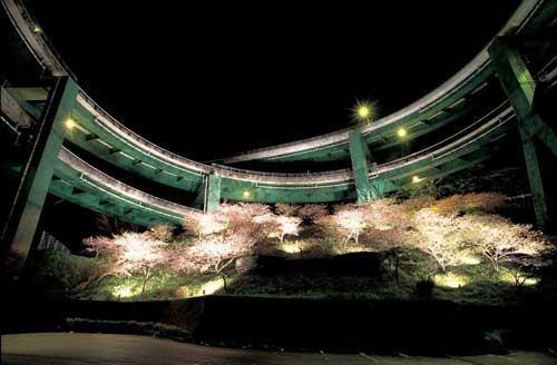 河津七滝ループ橋下の河津桜ライトアップ
