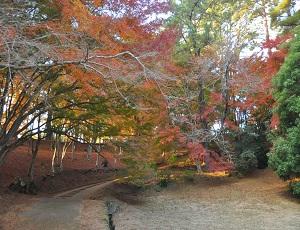 修善寺紅葉林。都内近郊で静かに紅葉狩りができる穴場スポット