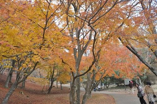 修善寺自然公園の中央部にあるもみじ林
