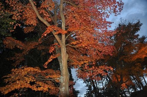 虹の郷の紅葉はライトアップが人気!露店もあるので、防寒対策をして出かけてみよう!