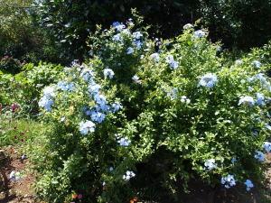 寝姿山山頂の歩道脇の花