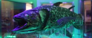 シーラカンスの剥製がある沼津の深海水族館