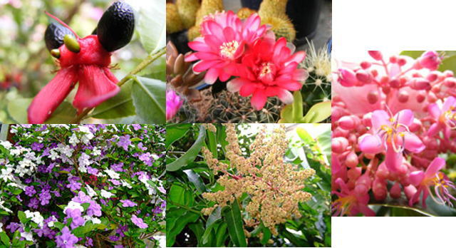 伊豆のコテージから入場料無料の植物園に行けます/四季折々の花
