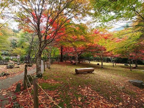 森は綺麗に整備されており、散策に最適