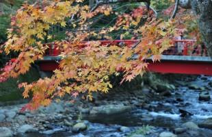 修善寺桂橋と紅葉
