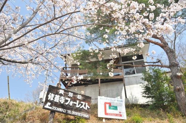shuzenji-sakura04