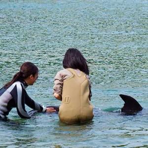 下田海中水族館 ドルフィンビーチ