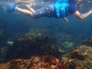 ヒリゾ浜、間近で熱帯魚が泳いでる。