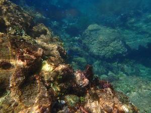 ヒリゾ浜の熱帯魚