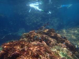 ヒリゾ浜、魚と泳ぐ