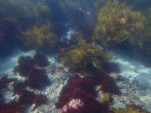 ヒリゾ浜、熱帯魚が優雅に泳いでる