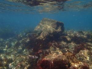snorkeling14