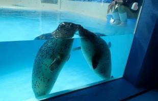 underwateraquarium01