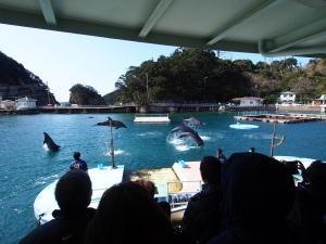 下田海中水族館・海上バンドウイルカショー