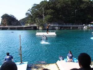 下田海中水族館・バンドウイルカショー