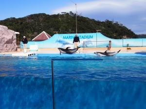下田海中水族館・マイルカショー