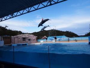 下田海中水族館・マイルカショー、ボールタッチ