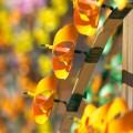 windflowerfestival-01