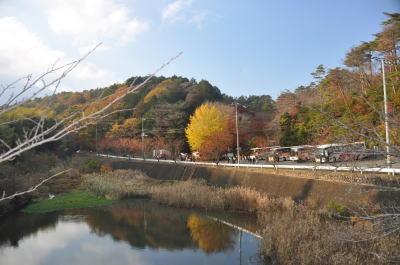 修善寺自然公園の紅葉