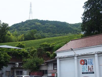 韮山反射炉の横の茶畑